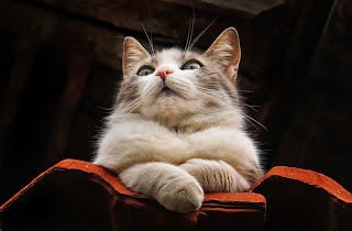 Mi gato Lady