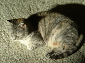 In Memoriam Sheba 2010