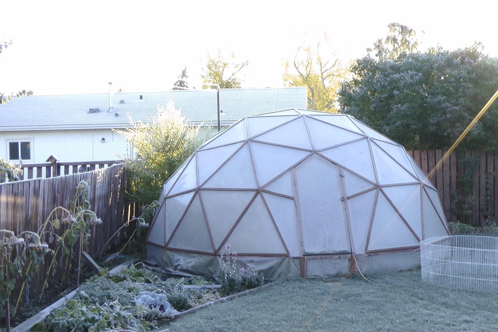 aus der k che und dem garten wie pflanzen auf frost reagieren. Black Bedroom Furniture Sets. Home Design Ideas