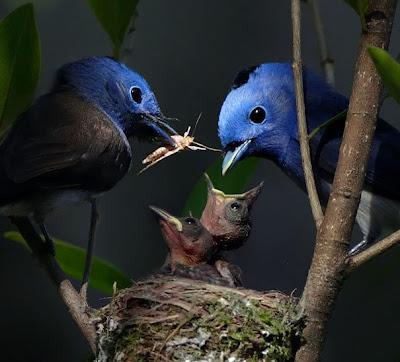 Pajarillos comiendo by John&Fish (10 fotos de aves)