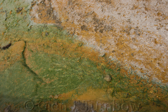 Green Cyanidium algae and orange cyanobacteria in the acidic waters of Porcelain Basin, Norris Geyser Basin, Yellowstone National Park