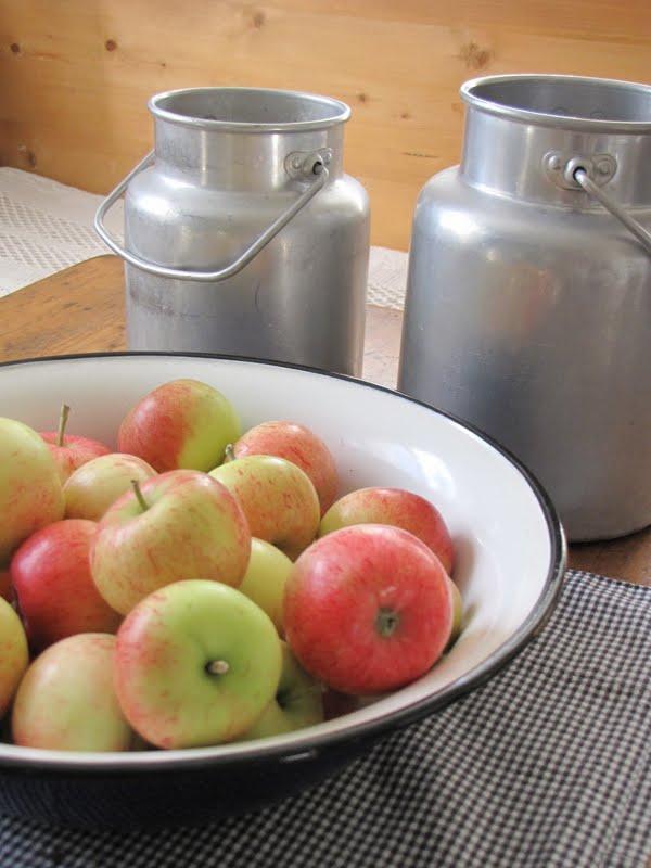 allergi mot äpple
