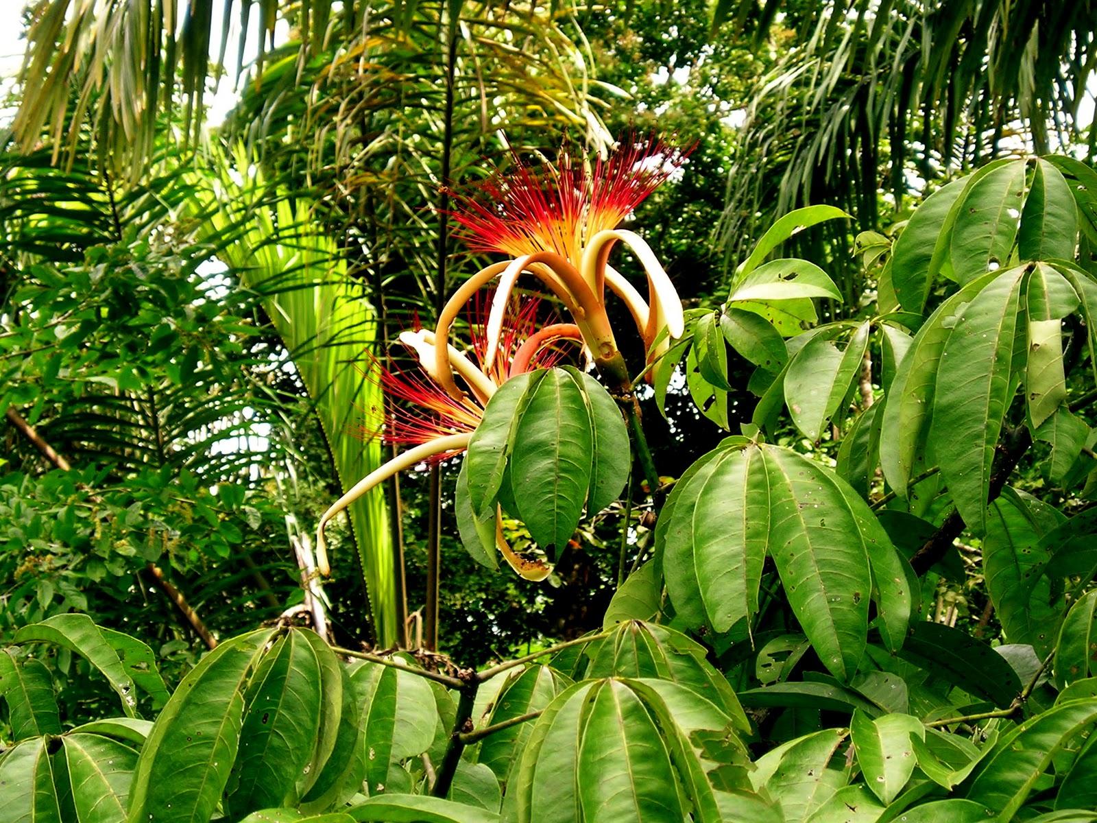 Garden planet february 2011 - Plante jungle ...