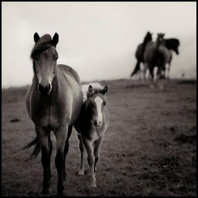hình ảnh đẹp và thú vị của ngựa