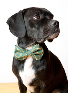 earth day costume, silly buddy, etsy blog, etsy.com, dog bowtie, dog collar, halloween