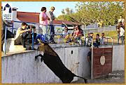 Fotos Alagoa 2015