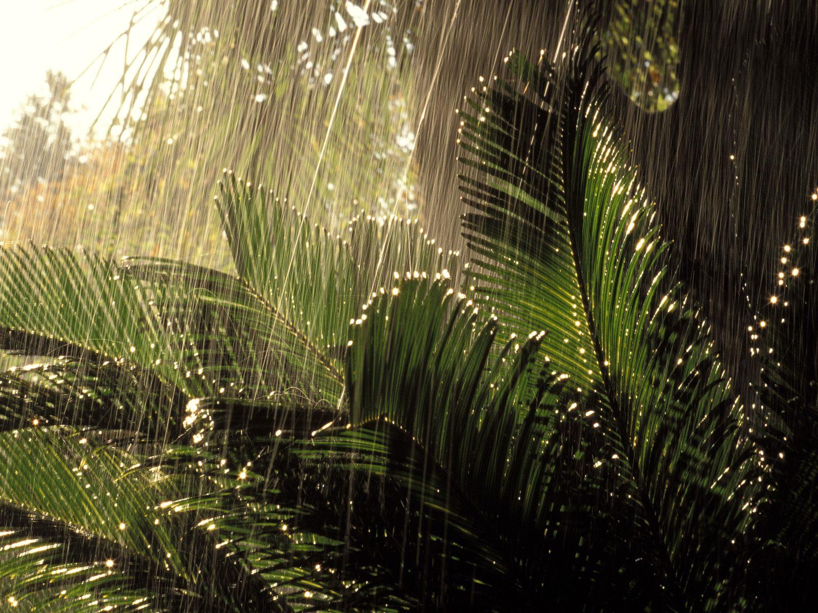http://1.bp.blogspot.com/-m7hC_zFhNyk/TlTCtP5YftI/AAAAAAAABPc/gwDuQxLMpR8/s1600/Jungle+Rain.jpg