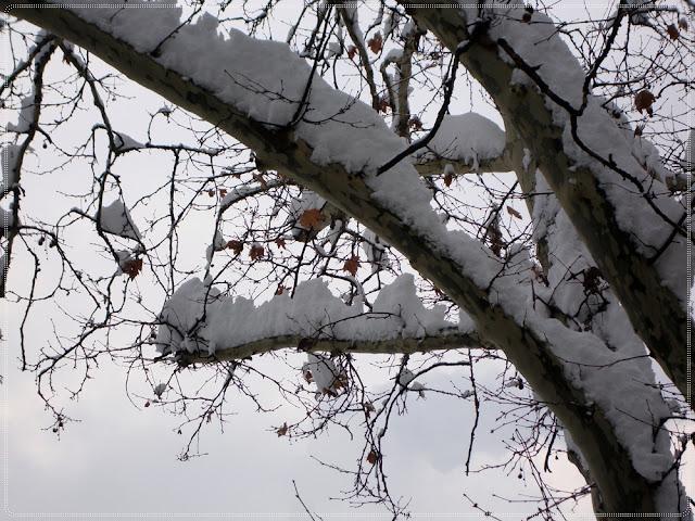 snijeg na stablu