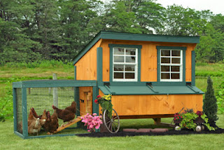 Portable chicken coops from Amish