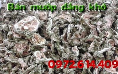 mướp đắng vị thuốc trong đông y hiện đang có bán tại Hà Nội