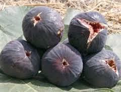 figs 4 u