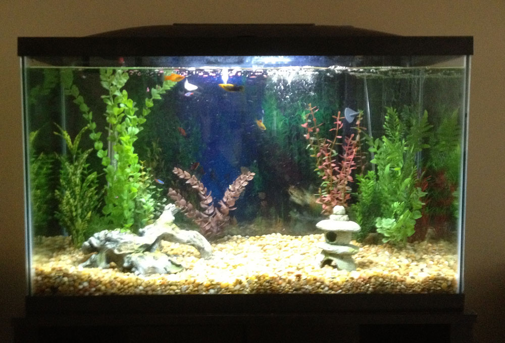 Triangle+Fish+Tank Triangle Fish Tank