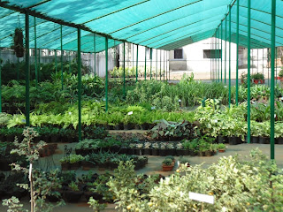 Arun's nursery at Pune
