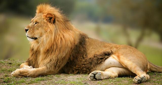 Animales, biologia y zoologia