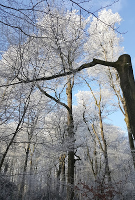 weiße Bäume Winter