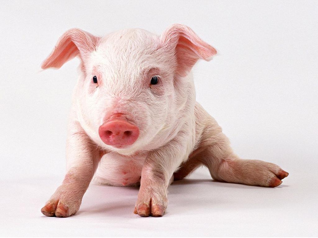 Estudios de Español: Los animales