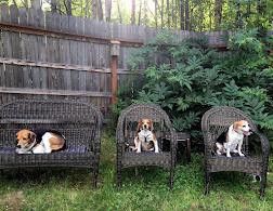 Cooper, Macy and Joy