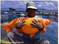 Spot  Mancing Jitu di Danau Toba