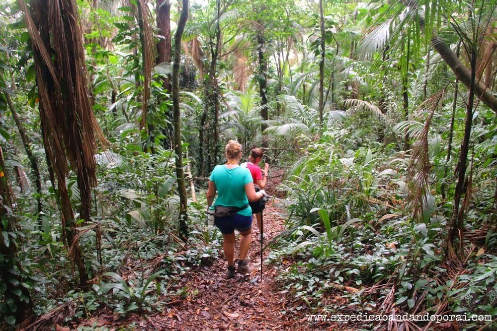 Trilha para a Cachoeira do Saco Bravo, Ponta Negra, Paraty