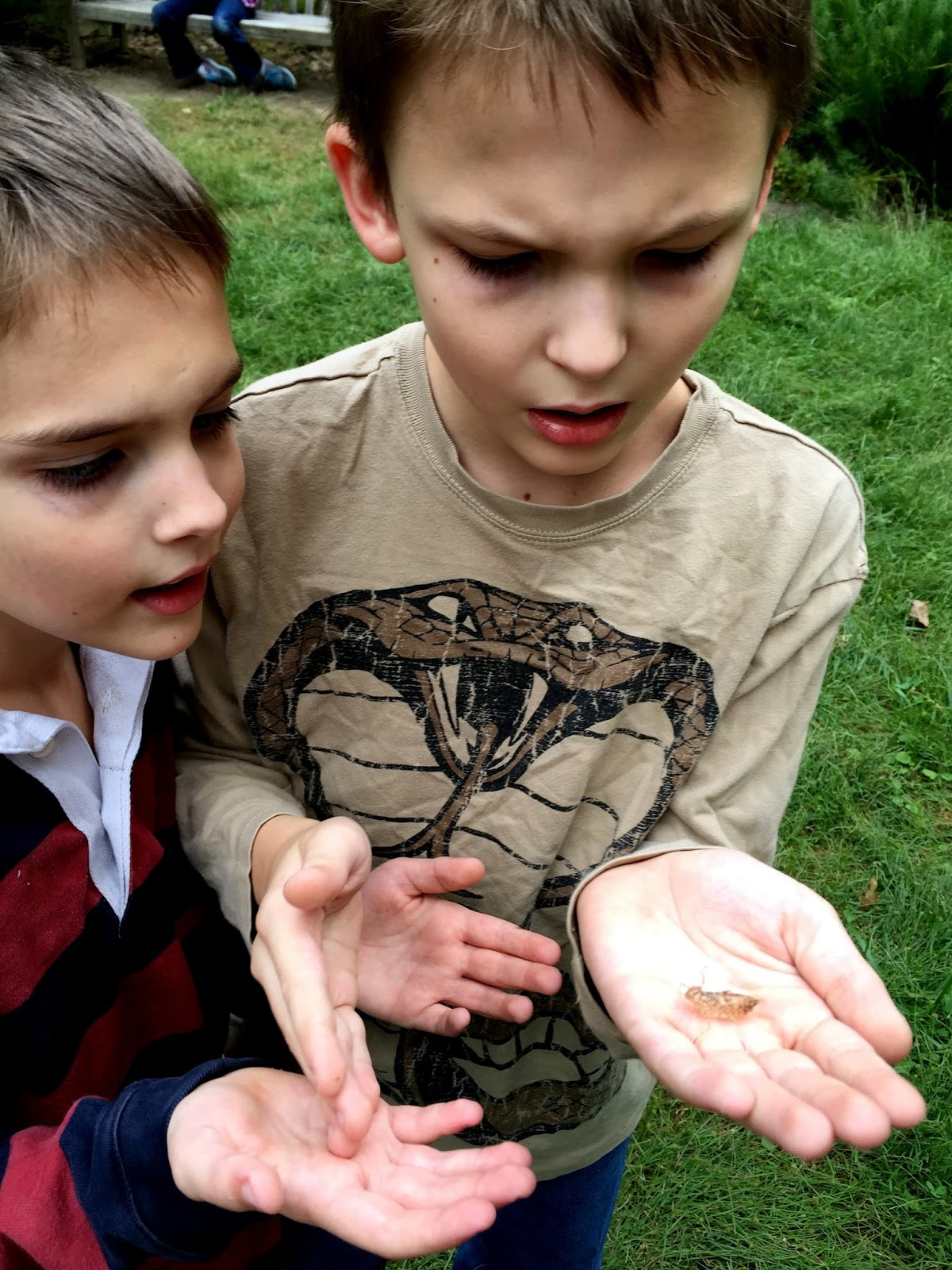 Zoom Times: Wordless Wednesday: Dwarf Conifers