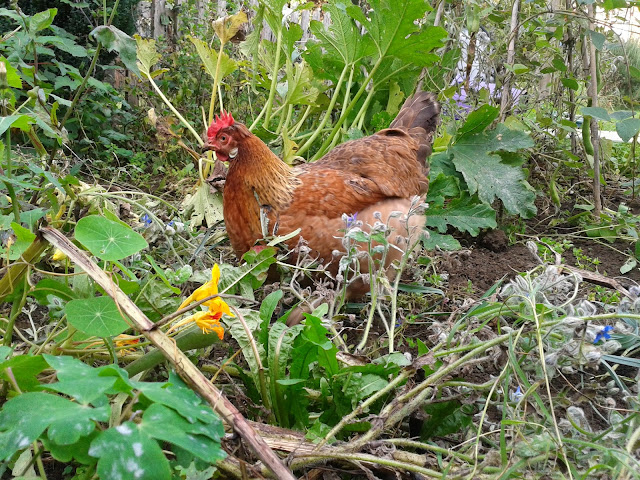 Agnes in the garden