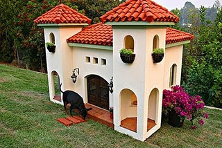 Dog's House beauty