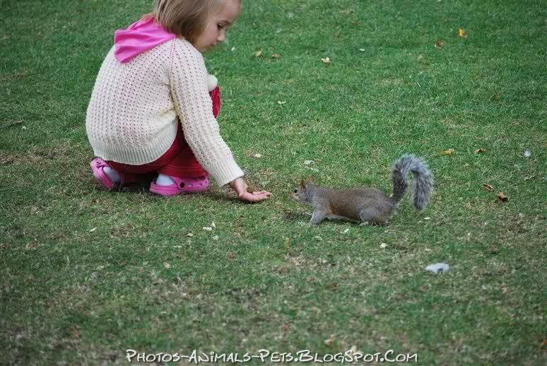 http://1.bp.blogspot.com/-mApXbFw0HNM/TtswmYseRWI/AAAAAAAACVI/YVn-YMCiqzo/s1600/squirrel%2Bpicture%2B.jpg