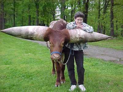 Inilah Binatang Bertanduk Terpanjang di Dunia
