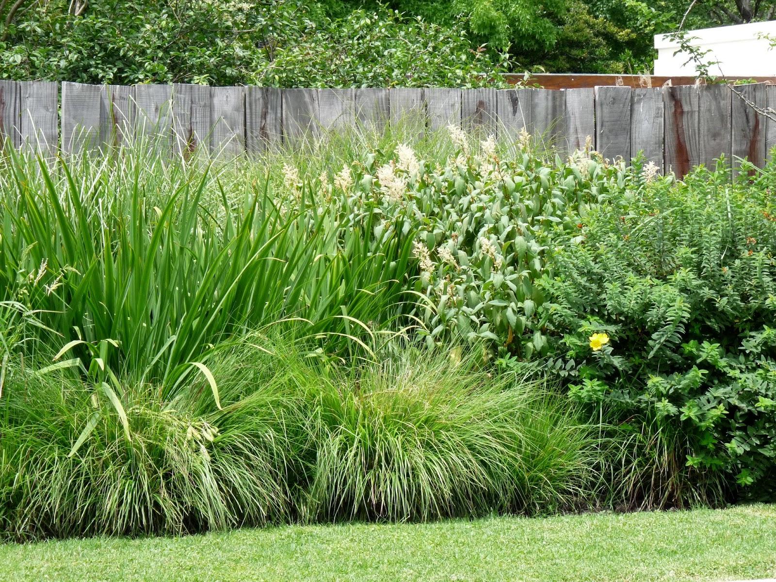 En el jardin cercos tapar hasta d nde for Arbustos perennes para jardin