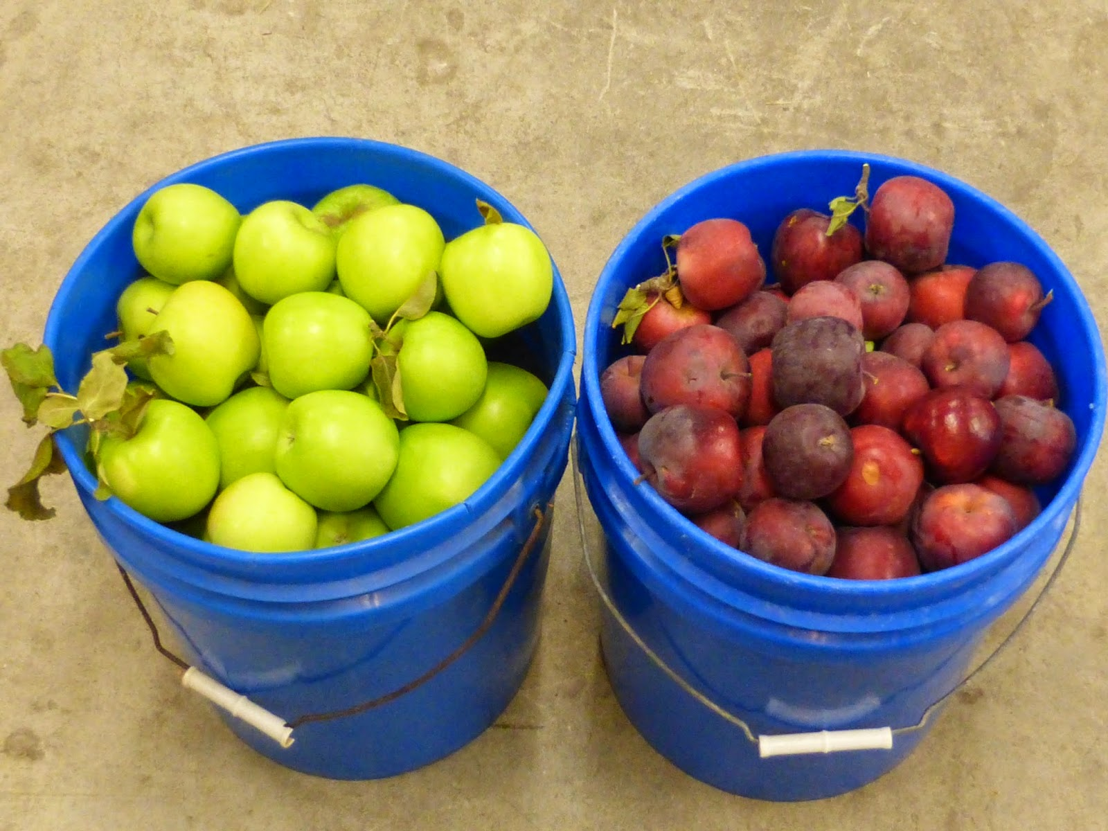 slo yarns apples galore fruit and fiber. Black Bedroom Furniture Sets. Home Design Ideas