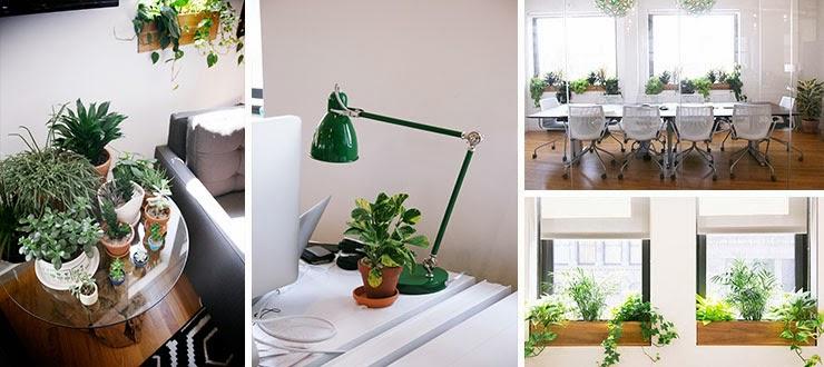 missjardin: Las mejores plantas para la oficina