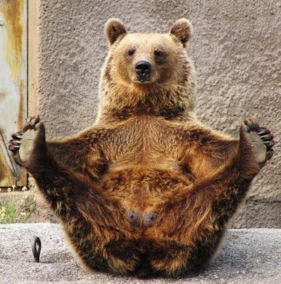 beruang santra