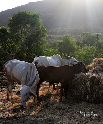 "A Village Morning clicked by ""Isha Trivedi"""