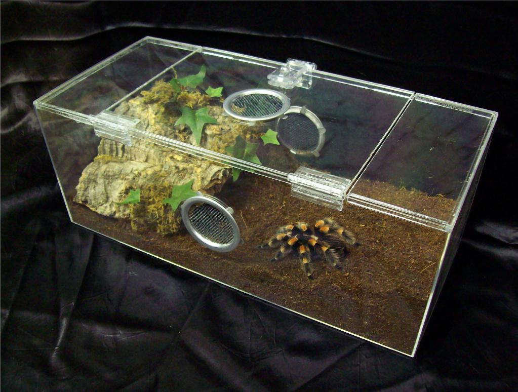 Terrestrial Tarantula Set Up Caresheet Chaco Golden Knee