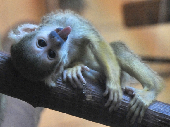 Pics of finger monkey sex