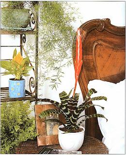 Многие фомелиевые после цветения ликвидируют, так что их можно ставить далеко от окна