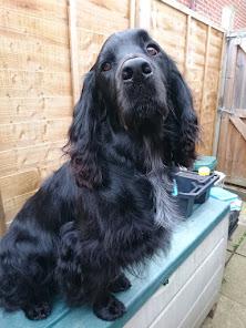 Assistance Dog Boris