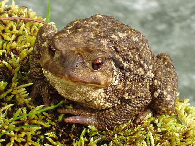 Diferentes tipos de animales animales salvajes del estanque for Tipos de estanques