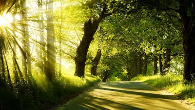 Un viaje por la mañana con los rayos del sol