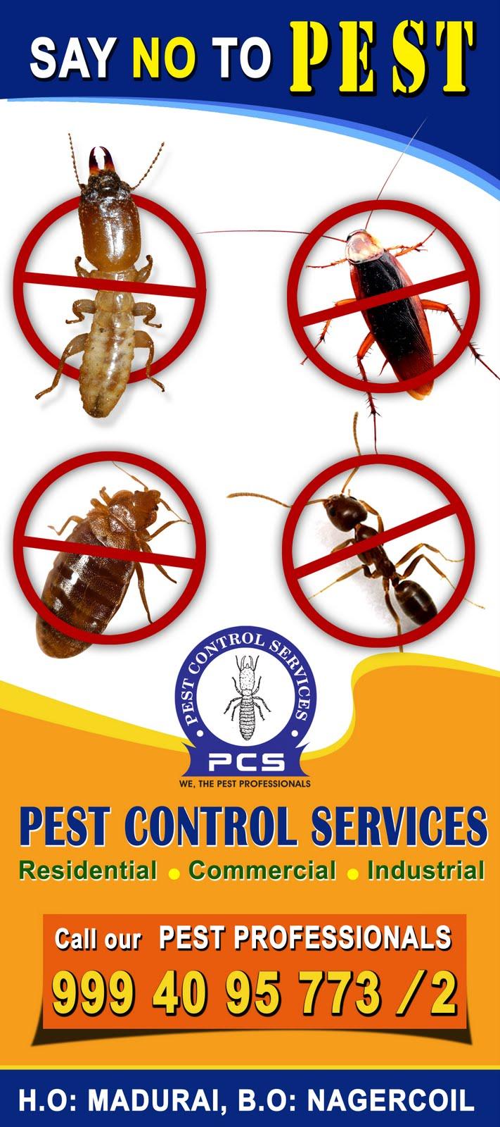 Pest Control Services : Pest control services