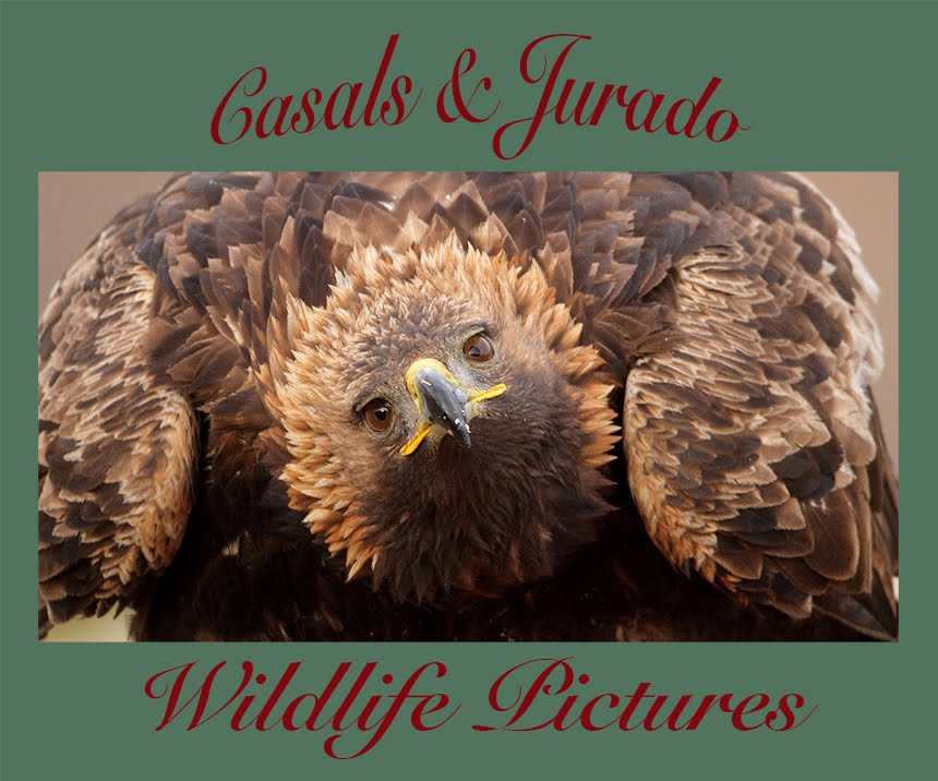 CASALS&JURADO WILDLIFE PICTURES