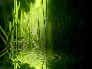 Grass Wallpapers HD