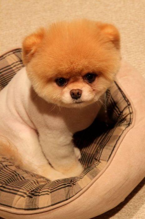 Cute Dog Named Boo
