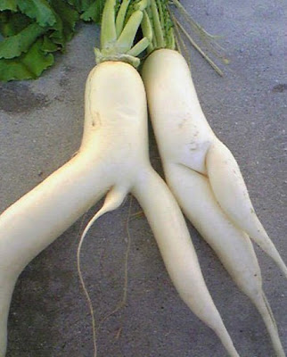 Funny Vegetable Radish Picture