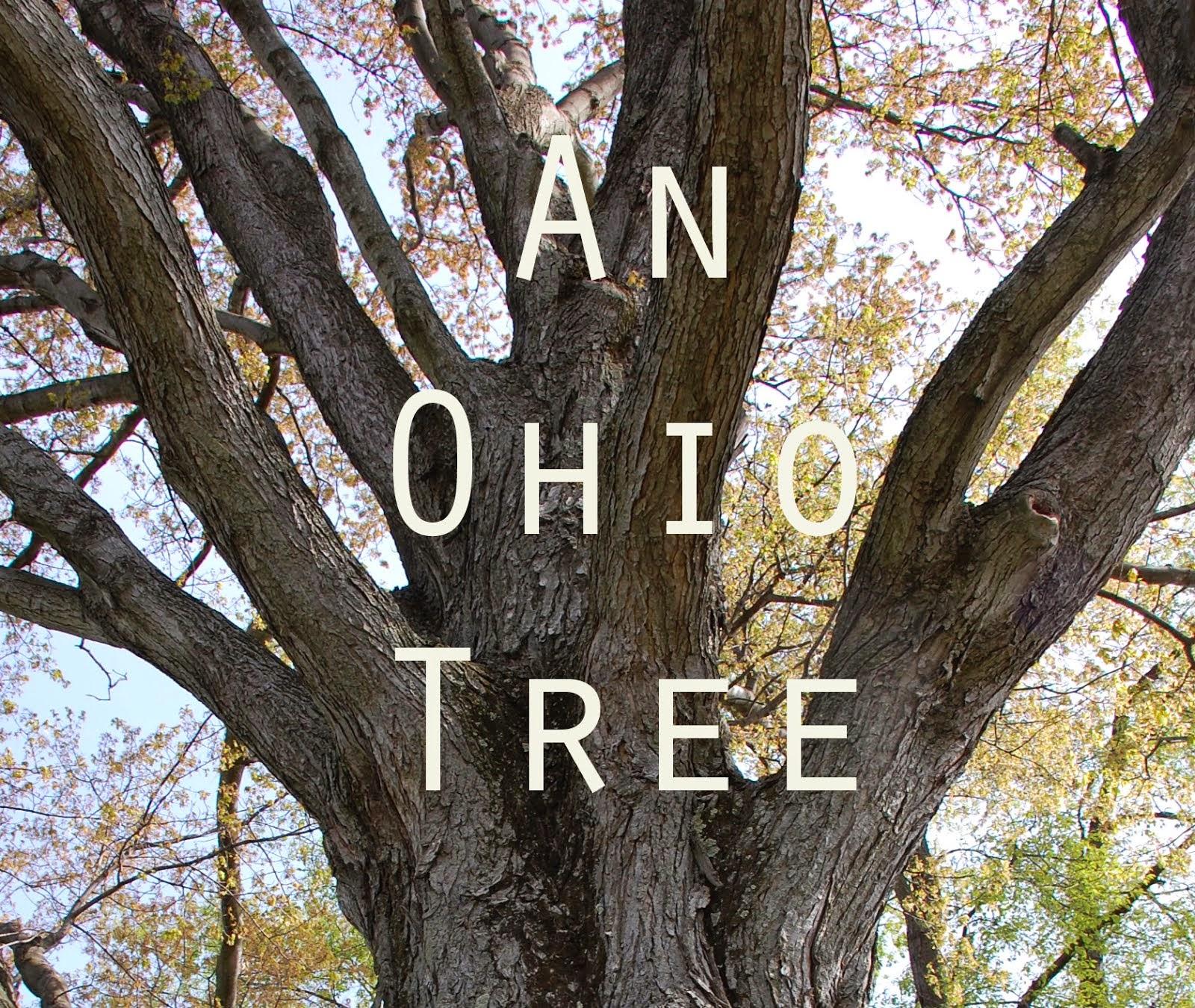 An Ohio Tree
