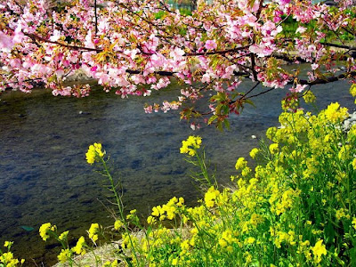 Spring Flower Sakura Photos by cool wallpapers at cool and beautiful wallpapers