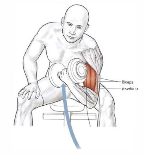 Как накачать плечи в домашних условиях без гантелей 18