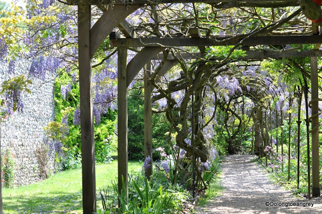 Wisteria, Grey's Court