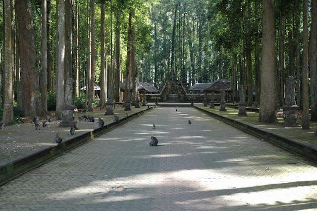 Objek wisata Sangeh Bali 2