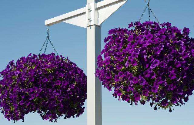 Alba hogar plantas de exterior for Plantas de exterior